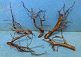 15-20 cm Moorkienwurzel Moorkienholz Garnelenbäumchen Wurzel