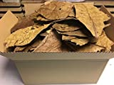catappa-leaves Seemandelbaumblätter 300g B-Ware unsortiert - Blitzversand im Paket