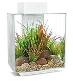 Fluval Edge 2.0 Aquarium, 46L, weiß