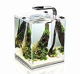 AquaEl Shrimp Set 2 30 Liter schwarz