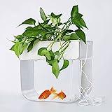 Joyfay Aquaponic Aquarium, Betta Aquarium, Hydrokulturreinigungsbehälter, Fische füttern die Pflanzen und die Pflanzen reinigen den Tank