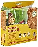 sera Catappa Leaves S 10-15 cm (10St) - Seemandelbaumblätter für die natürliche Wasseraufbereitung