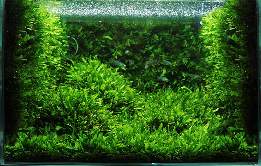 CO2 Anlage Aquarium Grundlagen