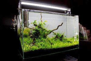 Aquarium mit CO2 Anlage