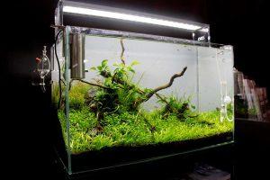Aquarium mit CO2 Anlage