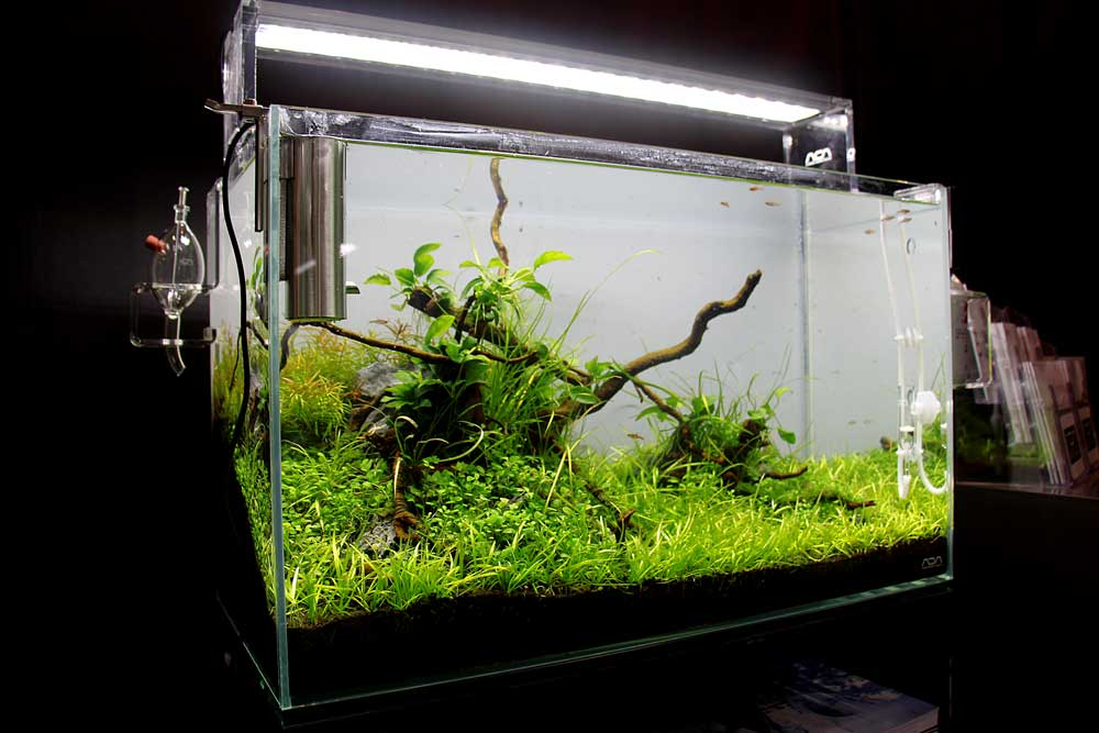 co2 anlage im aquarium sinnvoll wann ist eine co2 anlage n tig. Black Bedroom Furniture Sets. Home Design Ideas
