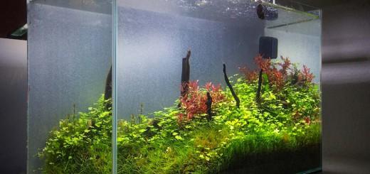 co2 anlage im aquarium co2 d ngung ein muss f r aquarienpflanzen. Black Bedroom Furniture Sets. Home Design Ideas