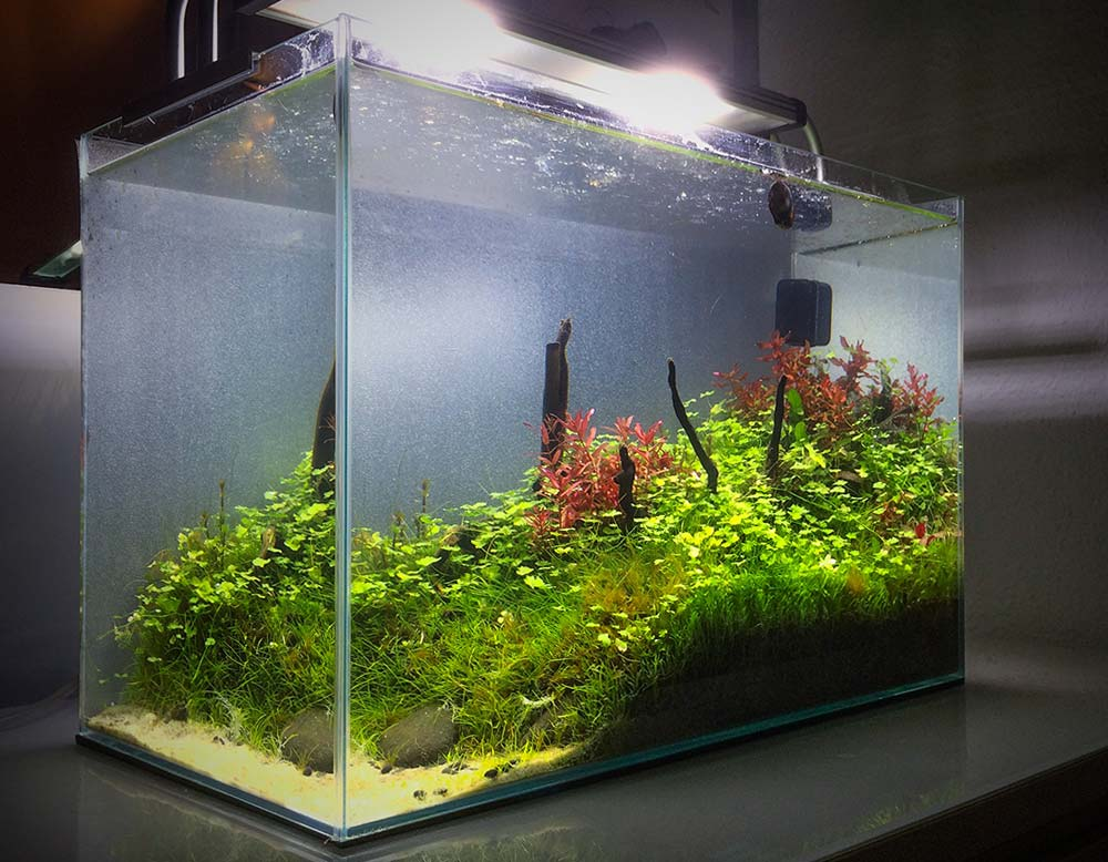 co2 anlage f rs nano aquarium so wird 39 s gr n im kleinen. Black Bedroom Furniture Sets. Home Design Ideas