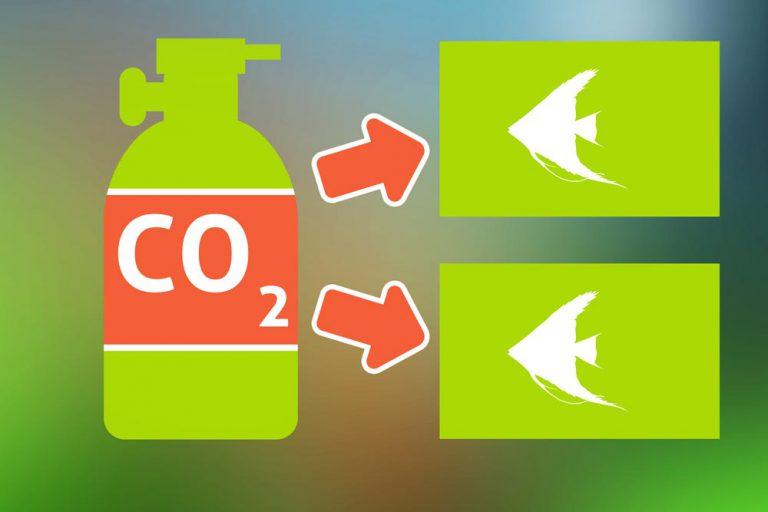 Mehrere Aquarien mit einer CO2-Anage betreiben