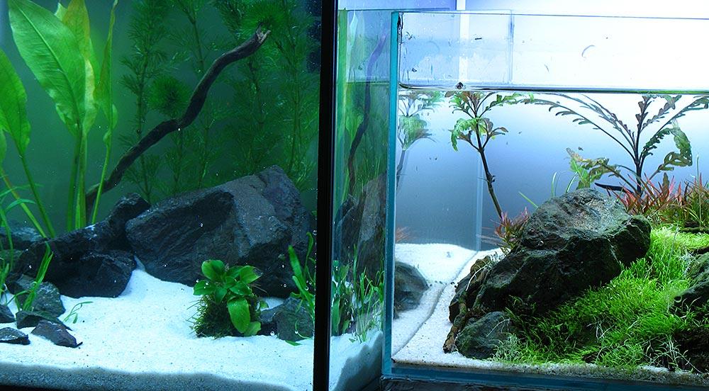 der nano cube ein aquarium muss nicht teuer sein. Black Bedroom Furniture Sets. Home Design Ideas