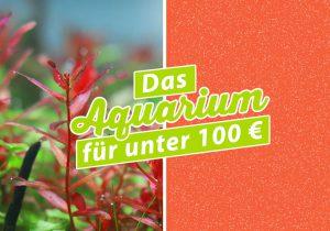 Aquarium für unter 100 Euro