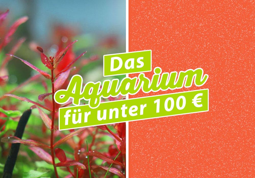 ein aquarium f r unter 100 geht das. Black Bedroom Furniture Sets. Home Design Ideas