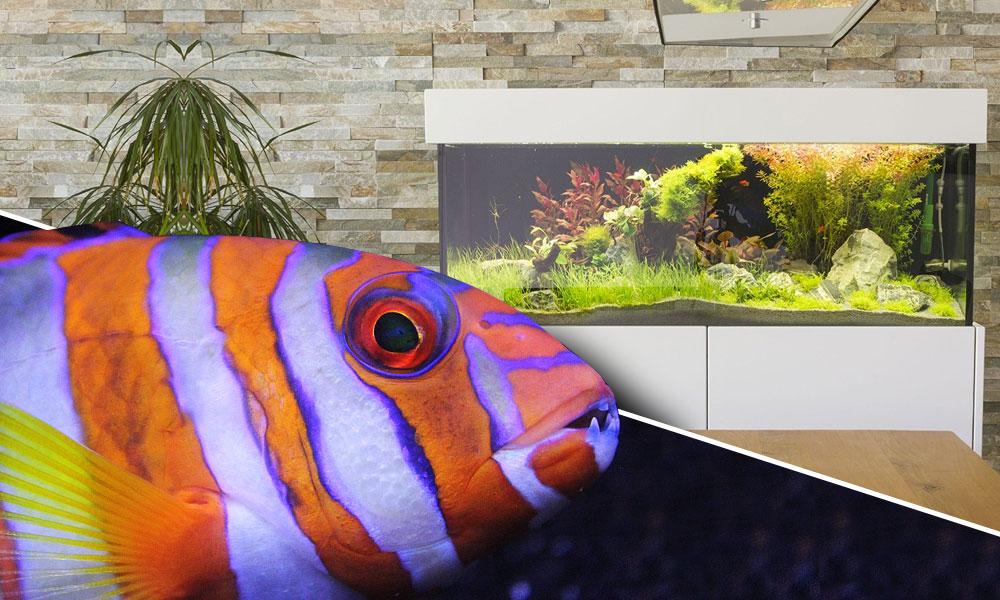 Axperto Aquarium Cubus