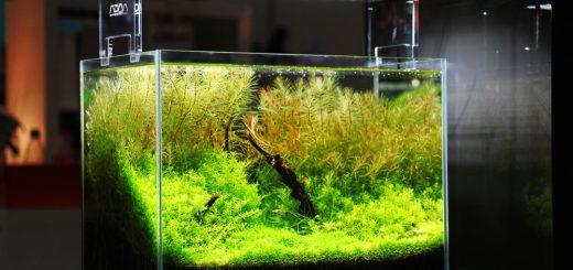 co2 anlage im aquarium richtig einstellen so drehst du am richtigen rad. Black Bedroom Furniture Sets. Home Design Ideas