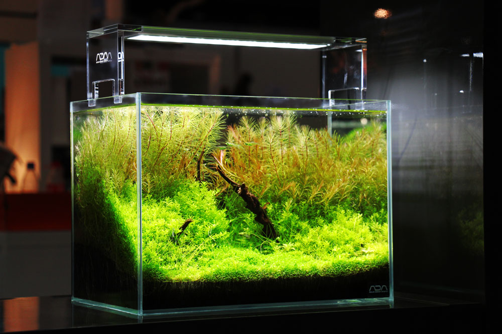 co2 anlage im aquarium alles wissenswerte zum thema co2. Black Bedroom Furniture Sets. Home Design Ideas