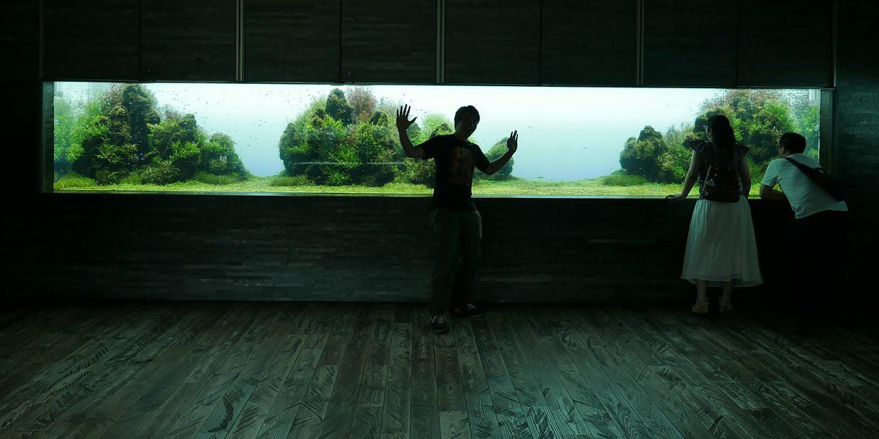 Takashi Amanos Aquarium läuft auch mit einer CO2-Anlage