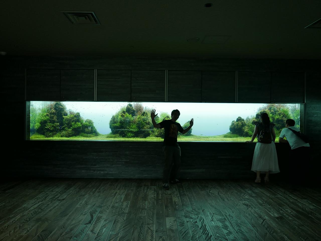 Co2 Anlage Kaufen So Findest Du Die Co2 Anlage F 252 Rs Aquarium