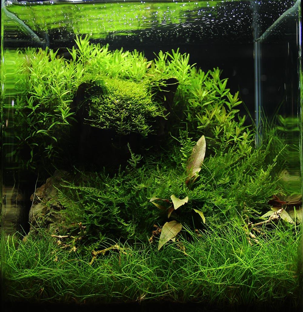 3d aquarium r ckwand kaufen von g nstiger 3d r ckwand hin bis zur r ckwandfolie. Black Bedroom Furniture Sets. Home Design Ideas