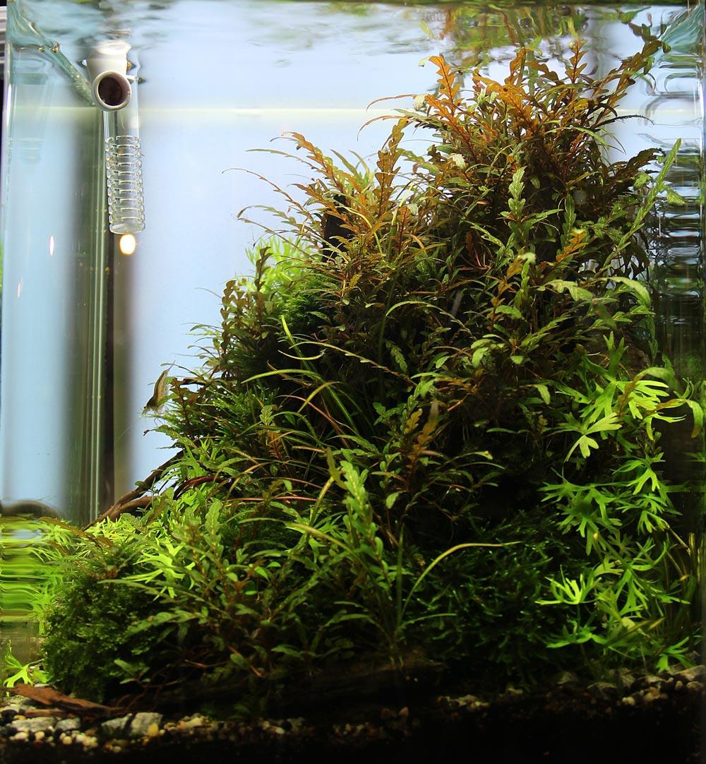 Weiße Rückwand wirkt im Aquarium schön hell