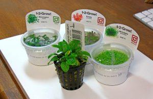 In-Vitro-Aquarienpflanzen; vielfältig und einfach einzusetzen!