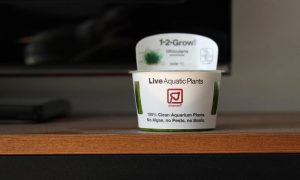 in-Vitro-Aquariumpflanzen: So werden diese geliefert