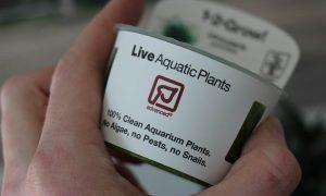 in-Vitro-Aquariumpflanzen: Das Ampelsystem