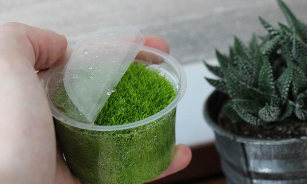 in-Vitro-Aquariumpflanzen mit flüssigem Nährmedium