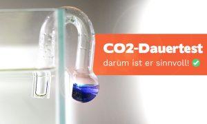 CO2-Dauertest