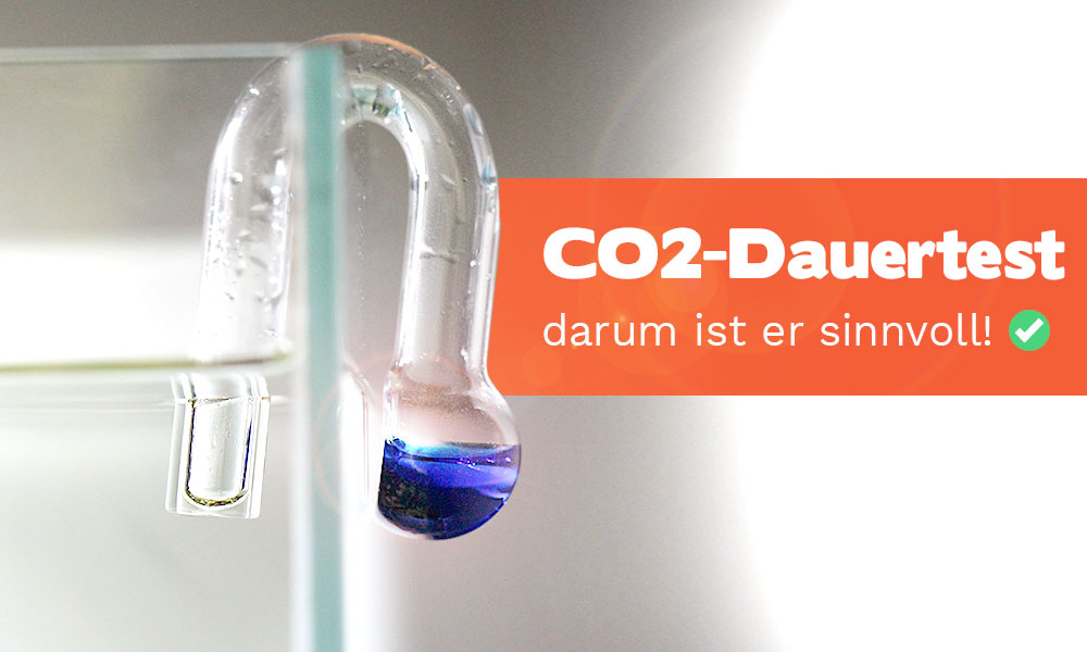 CO2-Dauertest