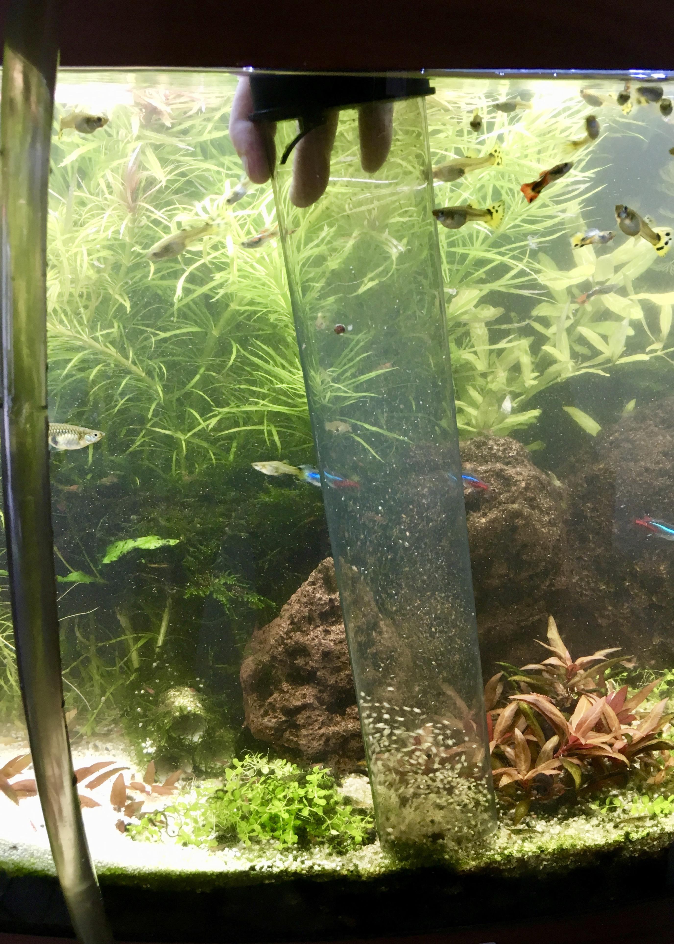 Mulmsauger Mit Diesem Tool Bleibt Der Bodengrund Im Aquarium Sauber