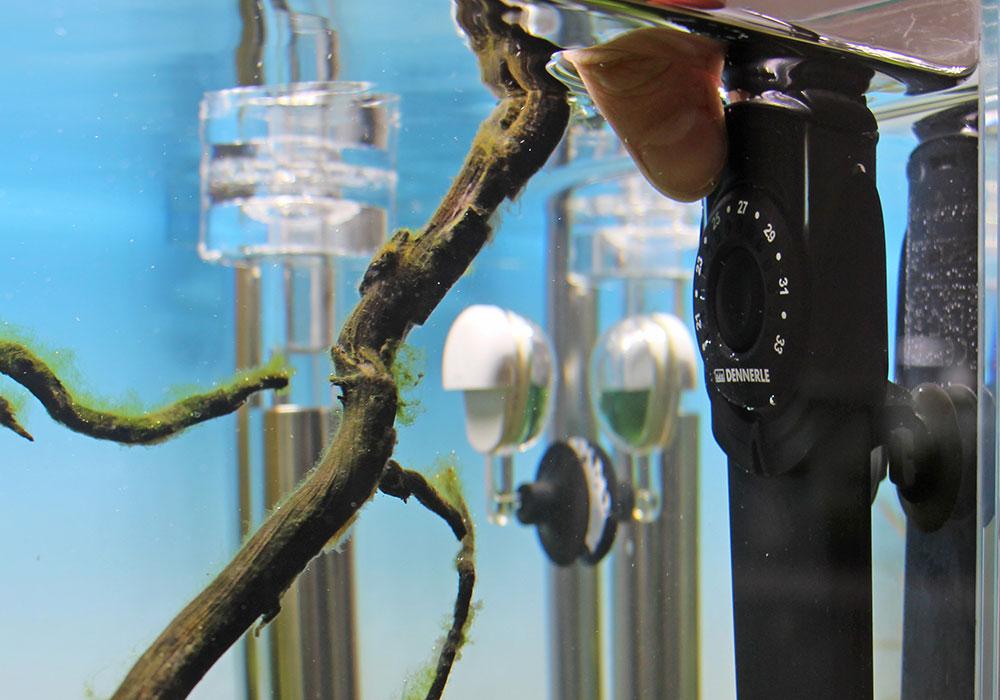 Heizstab abstellen um Aquarium zu kühlen