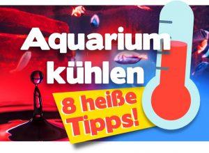 Aquarium kühlen –