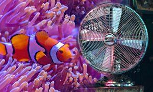 Aquarium-Kühler