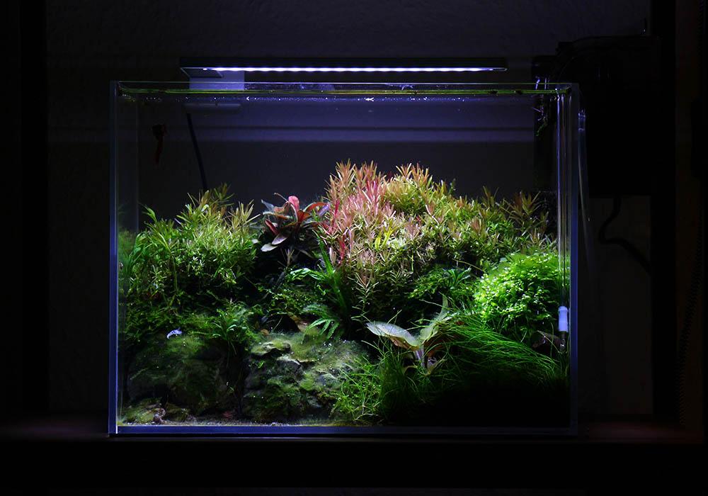 Algenfreies Aquarium nach Wasserwechsel