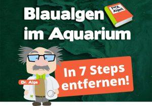 Blaualgen im Aquarium entfernen