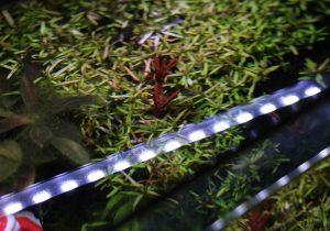 Ist LED-Beleuchtung Schuld an Algenplage?