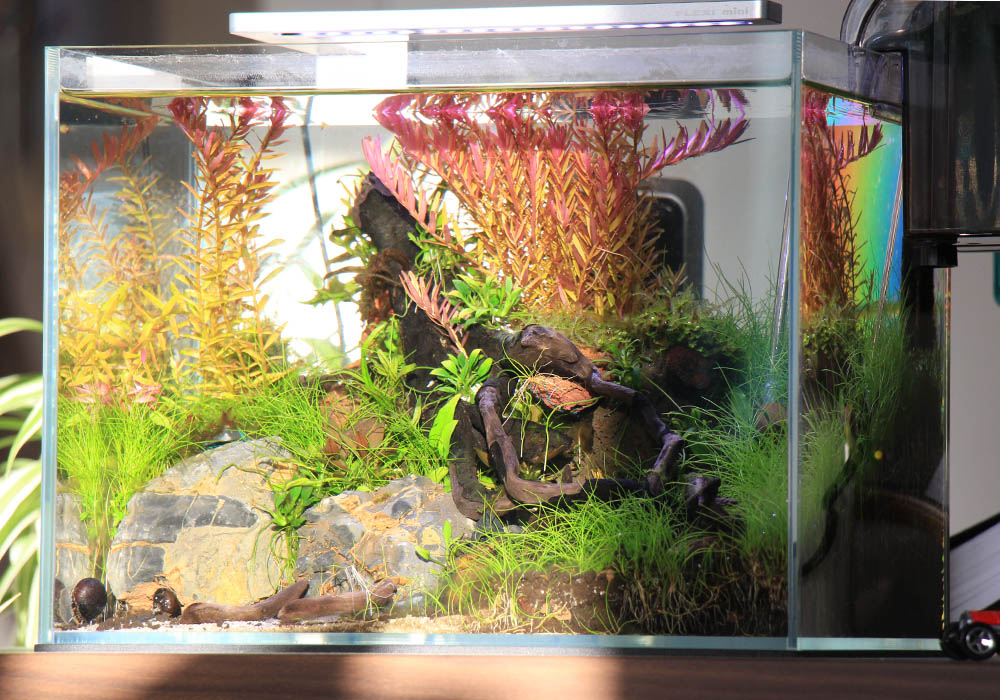 Sonniger Standort des Aquariums