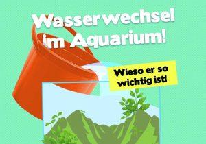 Wasserwechsel im Aquarium