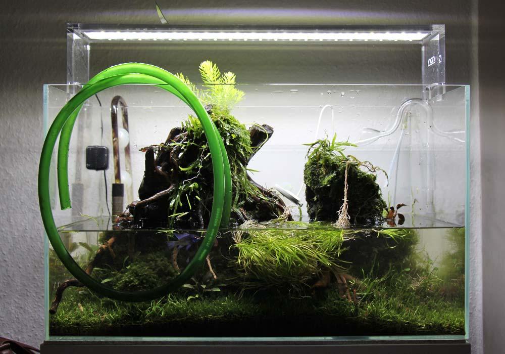 Wöchentlicher Wasserwechsel in meinem Aquarium