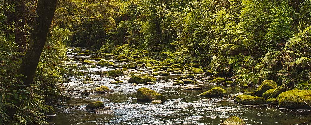 Wasserwechel sind in der Natur auch üblich.