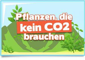 Pflanzen, die kein CO2 brauchen