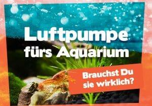 Luftpumpe fürs Aquarium