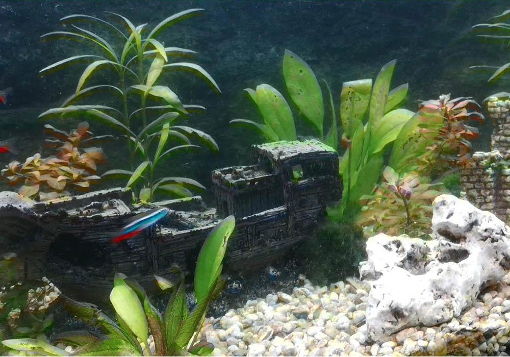 Schwebealgen im Aquarium: mit diesem Hilfsmittel waren sie plötzlich weg 7
