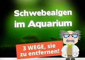 Schwebealgen im Aquarium