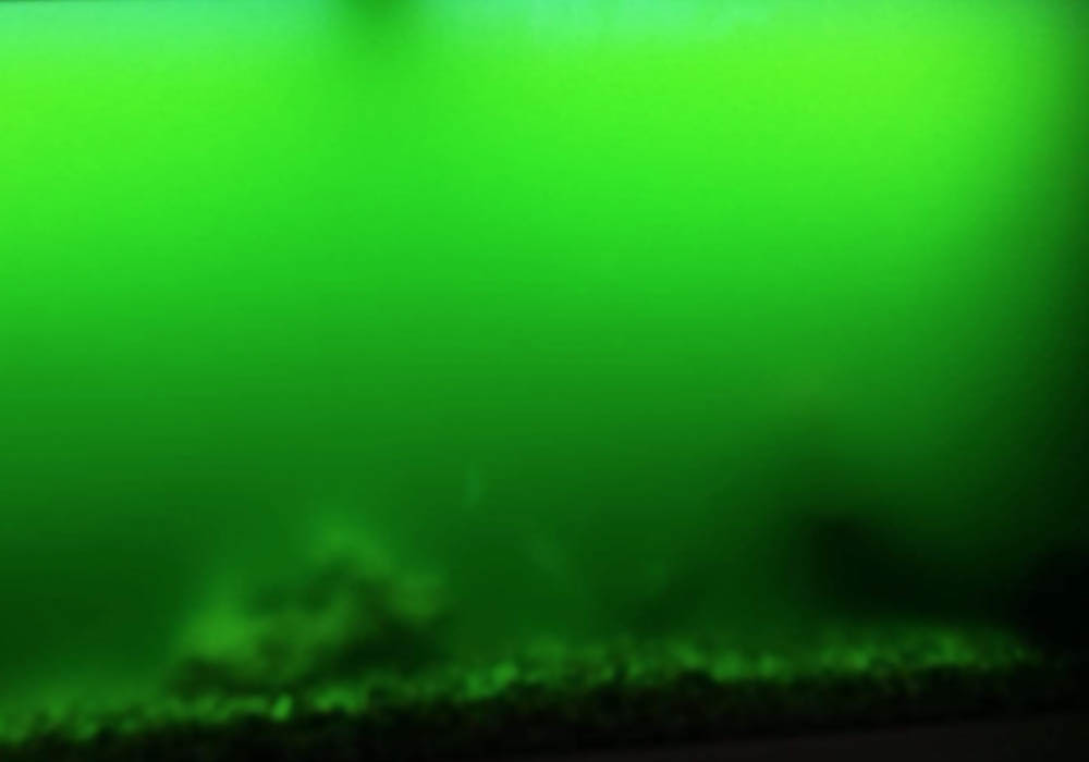 Grünes Wasser im Aquarium Schwebealgen kann durch UV-C-Klärer entfernt werden