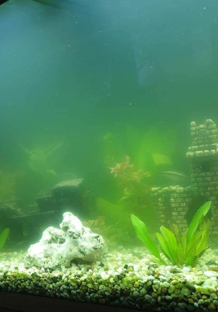 Schwebealgen im Aquarium: mit diesem Hilfsmittel waren sie plötzlich weg 4