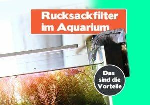 Rucksackfilter im Aquarium