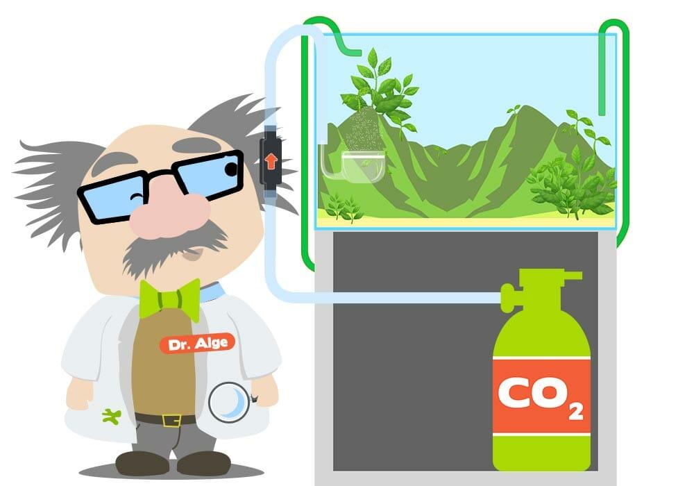 Wo CO2-Rücklaufventil anbringen