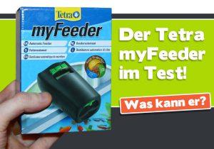 Der Tetra myFeeder im Test