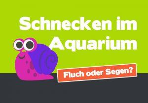Schnecken im Aquarium: wie Du die Schneckenplage bekämpfst 🐌 1